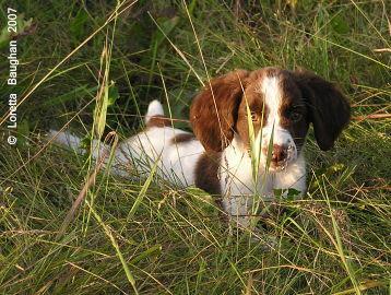 Autumnskye Pup