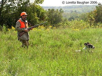hunting spaniel