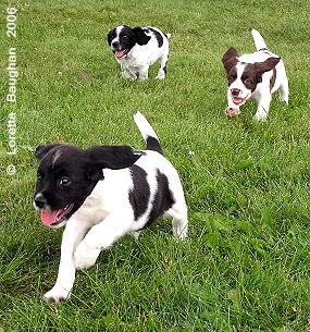 Autumnskye Pups